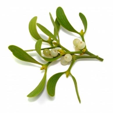 Au gui l an neuf les conseils phyto aromatiques de laurence pharmacien herboriste et ses expertes - Le houx porte bonheur ...