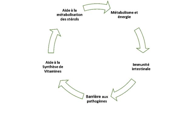 graphique probiotiques