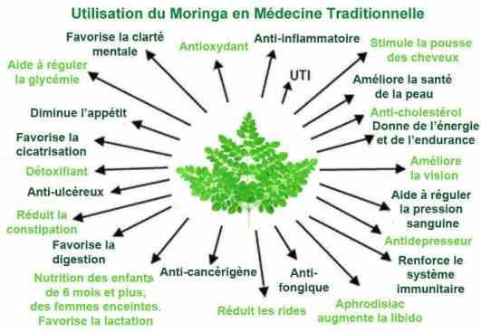 moringa-medecine-traditionnelle