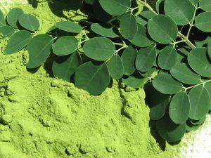 moringa-oleifera-300x225