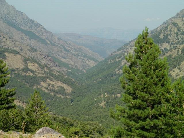 pin et montagne
