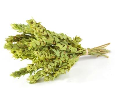 Perfoliata-1